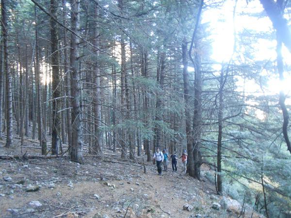 Στο δάσος λίγο πριν συναντήσουμε το δρόμο