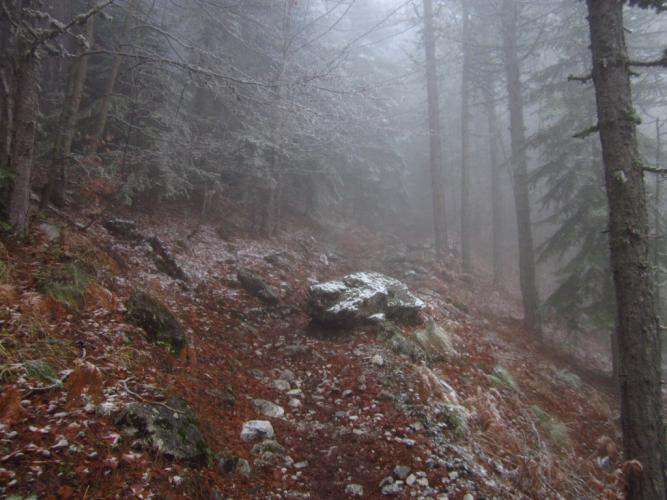 Στο δάσος με τις Οξυές
